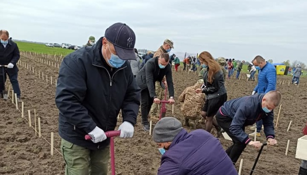 На Сумщині висадили у формі тризуба 9 тисяч дерев