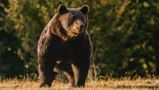 Принца Лихтенштейна обвинили в убийстве самого крупного медведя в Евросоюзе