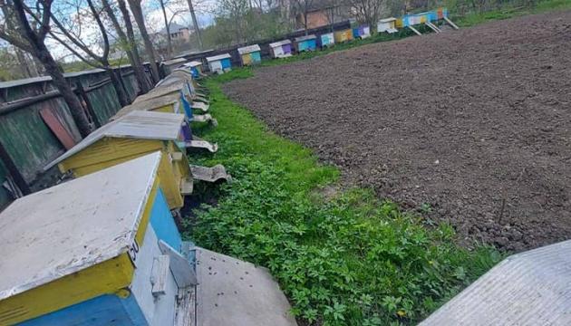 На Прикарпатті зафіксували масове отруєння бджіл