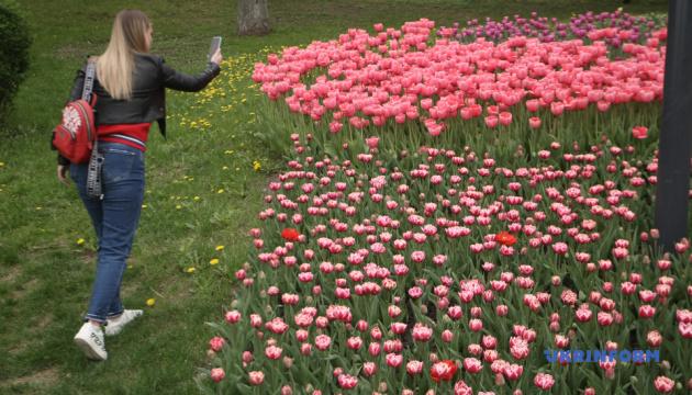 На Певческом поле расцвели более 700 тысяч тюльпанов