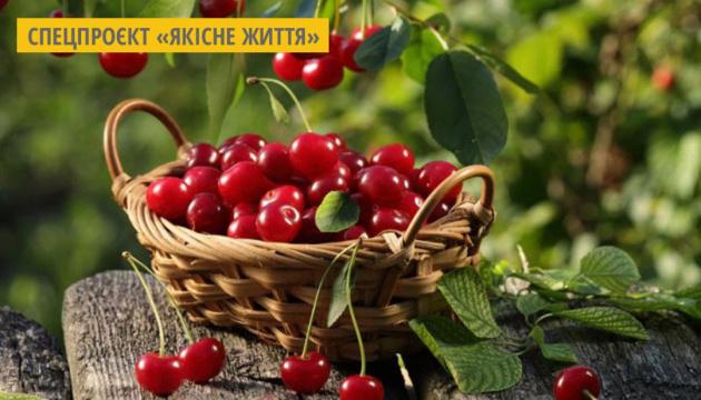 Візитною карткою Вінниці стануть борщ на вишнях та вишневі десерти