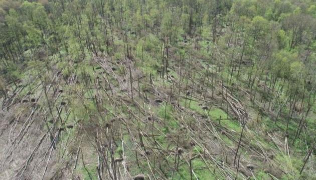 В Житомирской области от смерча пострадали 20 гектаров леса