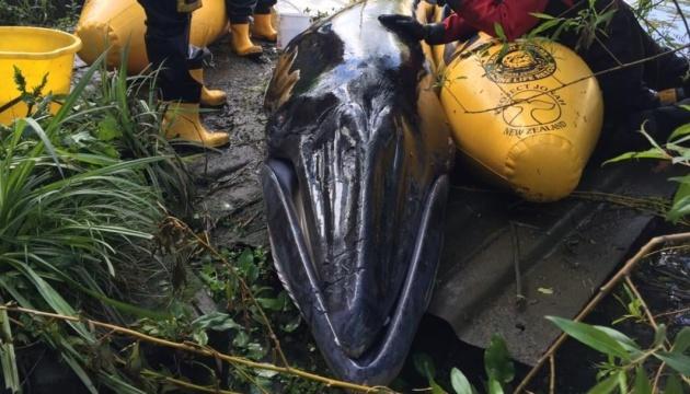 Дитинча кита, яке застрягло на мілині в Темзі, довелось приспати