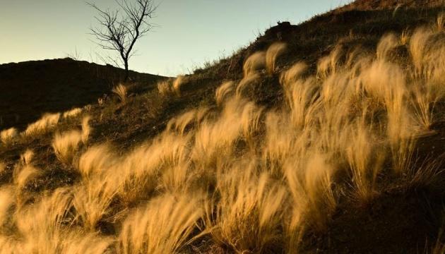 У ландшафтному парку «Тилігульський» розцвіла червонокнижна ковила