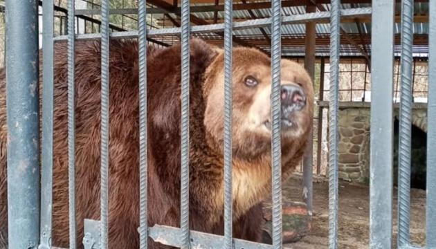 В реабилитационном центре «Синевир» умер косовский медведь Юра