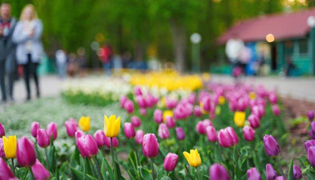 У Вінниці в центральному парку розквітли 40 тисяч тюльпанів
