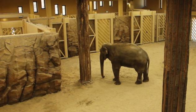 У новому зоопарку Харкова слонам віддали комплекс із басейном та водоспадом