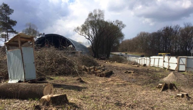 На Львовщине незаконно срезали 143 дерева вдоль трассы Киев - Чоп