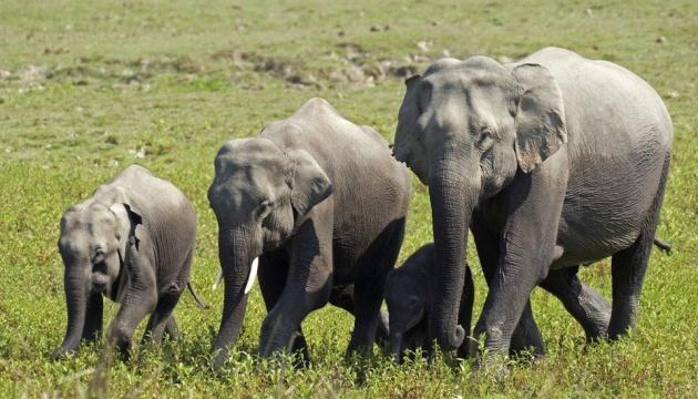 В Індії загинули майже два десятки слонів