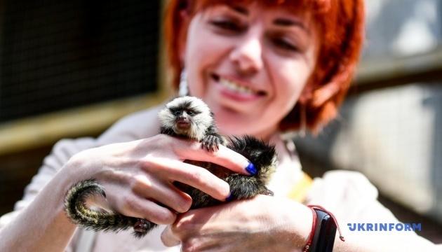 Карликовые обезьянки и коровы времен мамонтов: в Бердянском зоопарке - новые животные