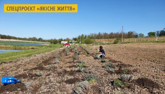 На Львівщині волонтери висадили лавандове поле на підтримку літніх людей