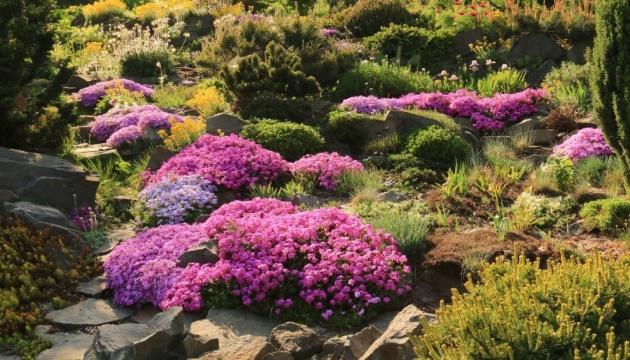 Колекція на мільйон: гіганти і карлики в саду Віктора Ганущина