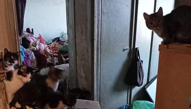 У Харкові з квартири пенсіонерки до притулку забрали 16 котів