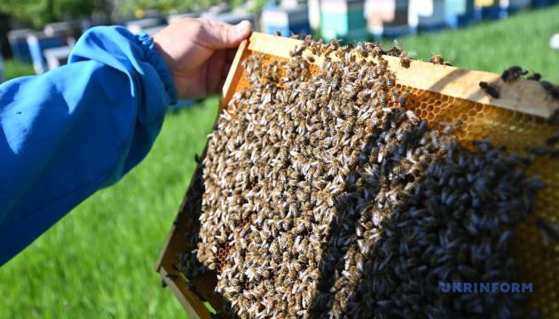 Медовый квас, пчелиный квест и апимедитация