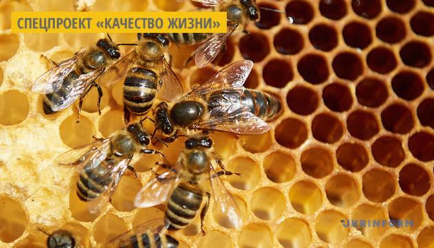 Пчелы очищают воздух, накапливая на своем теле микропластик - ученые