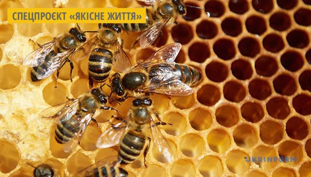 Бджоли очищують повітря, накопичуючи на своєму тілі мікропластик – вчені