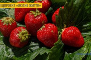 На Житомирщині влаштують фестиваль полуниці