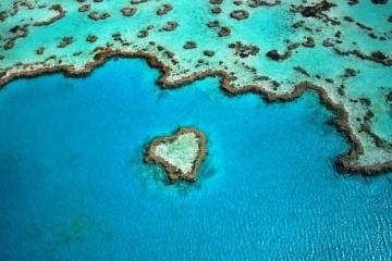 UNESCO : La Grande Barrière de corail est en danger à cause des bouleversements climatiques