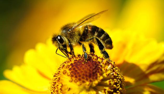Вчені розробили протиотруту для захисту бджіл від хімікатів