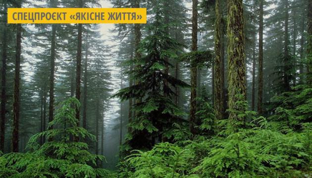 В Україні необхідно створити більше 2 мільйонів гектарів нових лісів