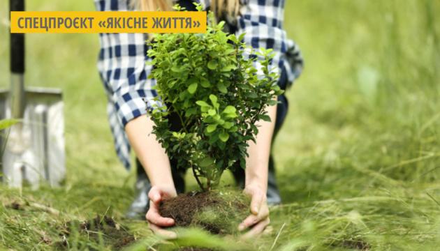 У Києві цього року запланували висадити майже 7 тисяч дерев