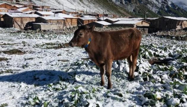В Черноморском регионе Турции неожиданно выпал снег