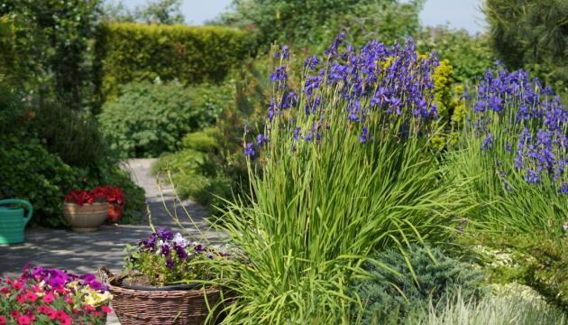 Ландшафтний дизайн: робимо «розумні» сади без газонів