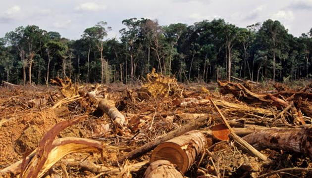 В Амазонії вирубали рекордну кількість лісу за місяць