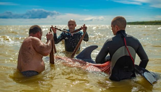 На Херсонщині врятували дельфіна, якого шторм прибив до берега