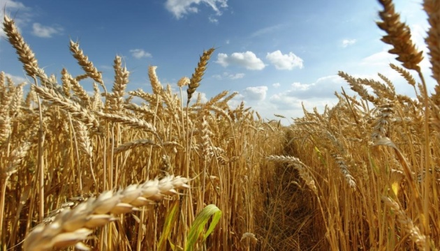 Трансформация продовольственных систем – украинский контекст