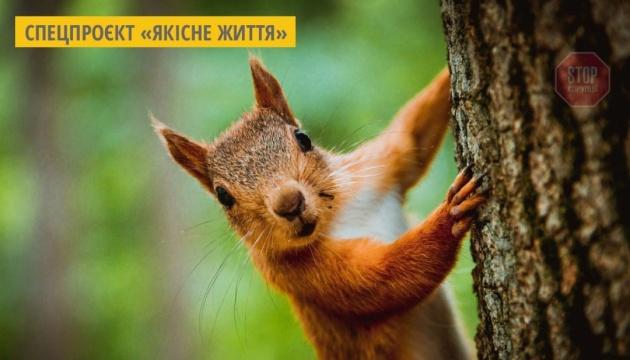 В Україні до 2100 року може зникнути 97% природного ареалу білки