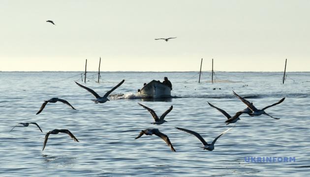 Вылов рыбы в Азовском море увеличился на 26%