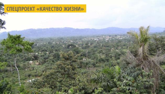 Габон - первая африканская страна, которой заплатили за защиту тропических лесов