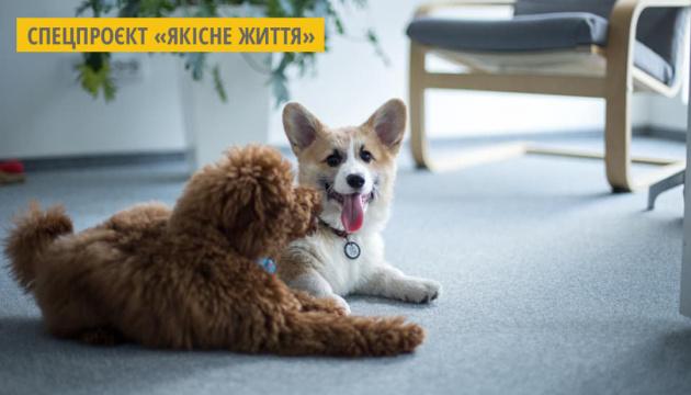 В Україні понад 200 компаній долучилися до щорічної акції «Візьми собаку на роботу»