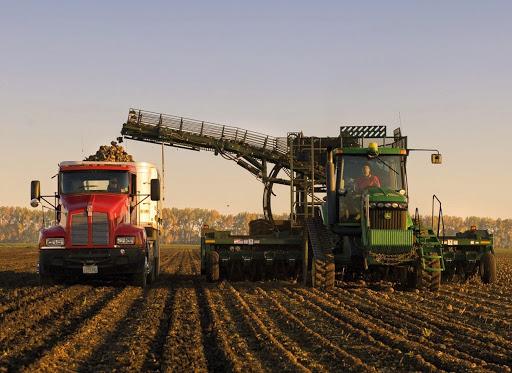 Аграрії вказують на складність технологій вирощування цукру та значні ризики