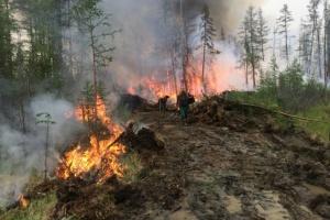 В Росії горять ліси – 200 пожеж вирують на понад 830 тисячах гектарів