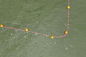 Ученый объяснил, почему Азовское море заполонили медузы