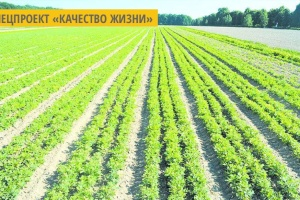 Винницкие гослесхозы в этом году высадили более 5 миллионов саженцев деревьев