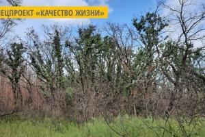 Сгорел в прошлом году: на Луганщине самовосстанавливается лиственный лес