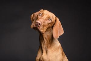 Собаки здатні розпізнавати брехню - дослідники