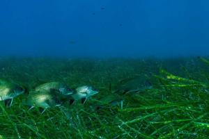 Морские водоросли страдают от шума, вызванного людьми - ученые