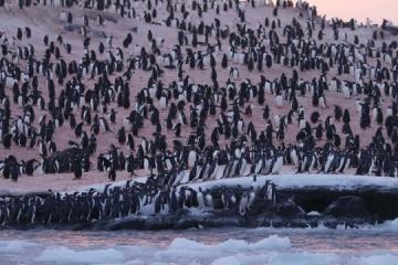 Thousands of penguins crowding near Ukrainian polar station