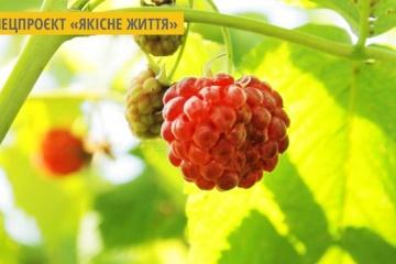 Вінничанка виготовляє авторські солодощі з того, що росте на городі