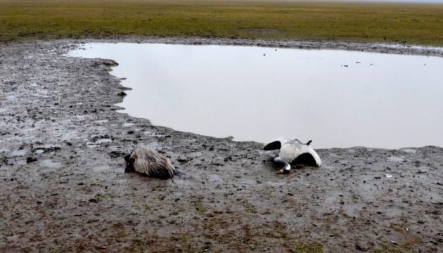Через загибель журавлів в «Асканії-Новій» оголосили підозру агроному