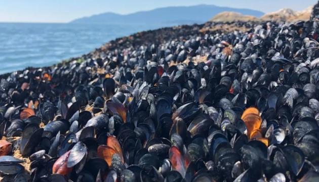 Из-за аномальной жары в Канаде погибли миллиард моллюсков и рыб