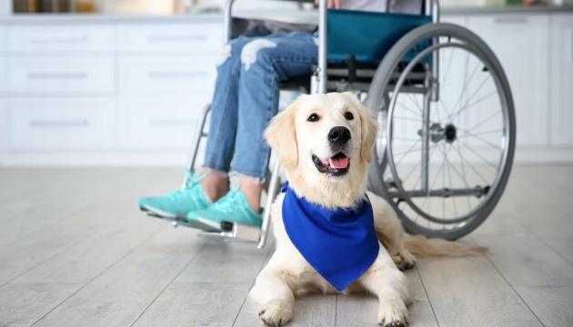 Собачья терапия: за работой – четвероногие «реабилитологи»
