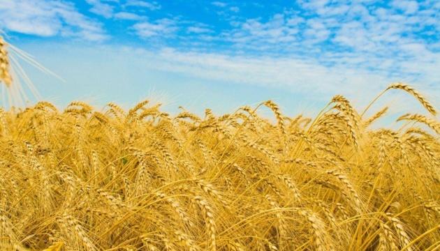 МХП в этом году получит урожай зерновых и подсолнечника с 355 тысяч гектаров