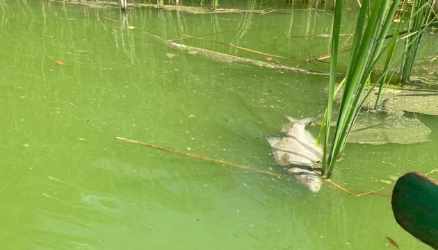 На Черкащині у водосховищі масово загинула риба