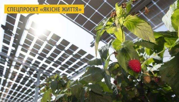 У Японії здійснюють екопроєкт з вирощування фруктів під сонячними панелями