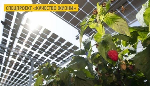 В Японии осуществляют экопроект по выращиванию фруктов под солнечными панелями